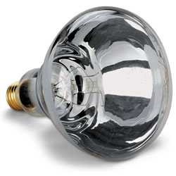 Electric Infrared Heat Bulb – Clear, 250 Watt