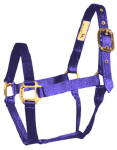 Average (800-1100 lb.) Horse Halter--Blue