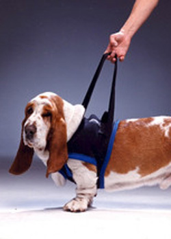 Walkabout Front Harness, Extra Large